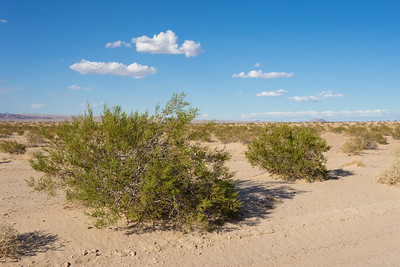Green Brush in Barren Desert