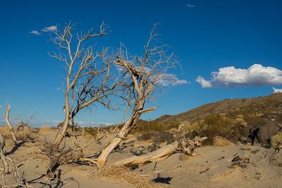 Dead Tree Leans in Deser