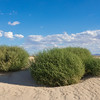 Bright Green Bushes in Desert