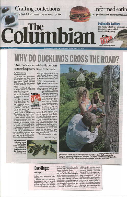 2010 Why Do Duckling Cross the Road?