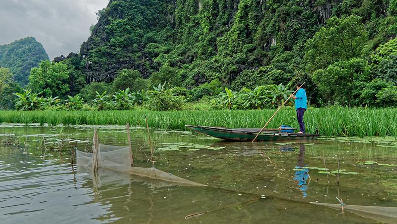 Rice farmer inspecting the plants