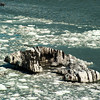 Ice floes in Glacier Bay NP, AK