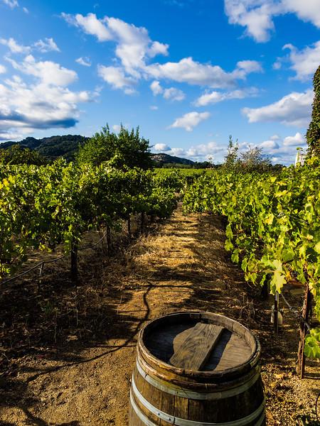 OBrien Estate Vineyard; Napa