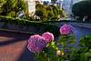 Lombard Street; San Francisco