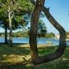 Live Oak Branch; Craig Park