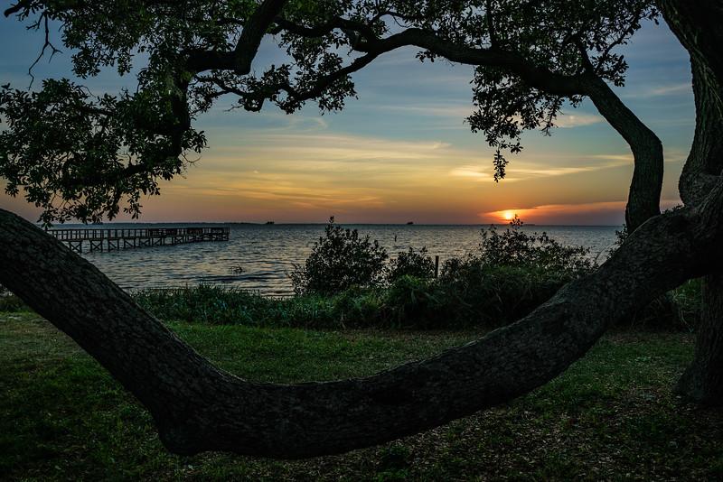 Live Oak Branch; Crystal Beach
