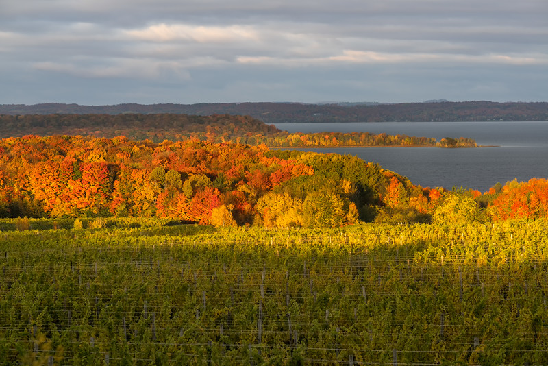 Old Mission Peninsula Vineyards
