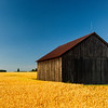THRESHING SHED IN WHEATFIELD