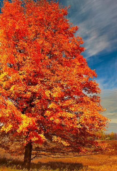 Fall Foliage; West Branch, MI