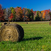 Bales and Foliage