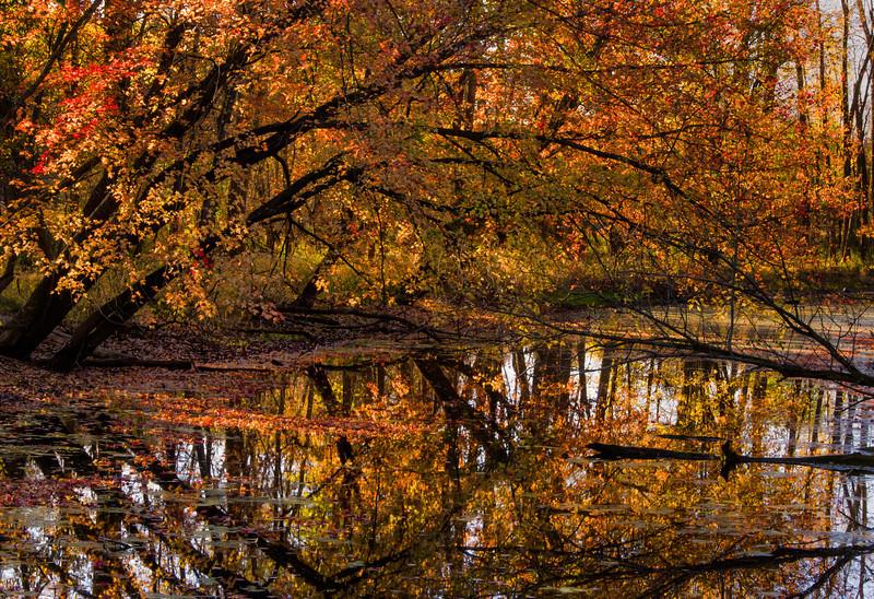 Bayou, Shiawassee National Wildlife Refuge in Fall