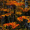 Fall Color; Hiawatha NF