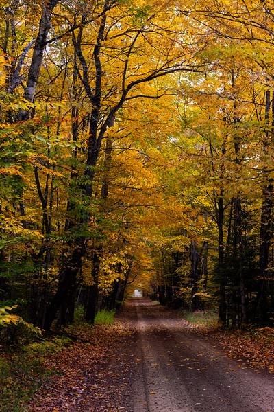 Tunnel of Trees; Stonington Peninsula, MI
