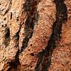 Tree Bark; Carson NF