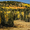 Carson National Forest Fall Color