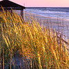 Nags Head Beach; Outer Banks, North Carolina