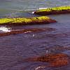 Ocean Moss; Rhode Island