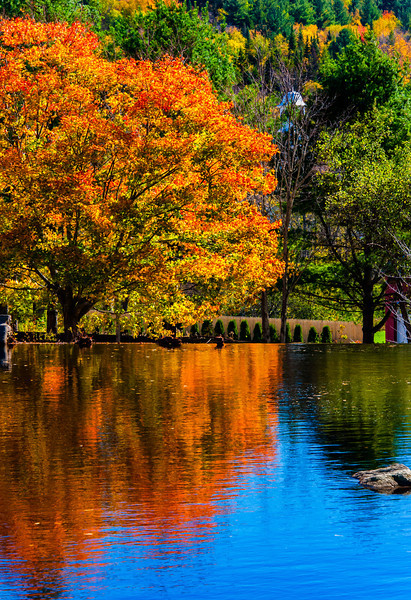 Pond Reflection, Weston