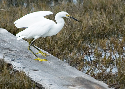 """Egret # 1798.  Pt. Isabel, Richmond,Ca."