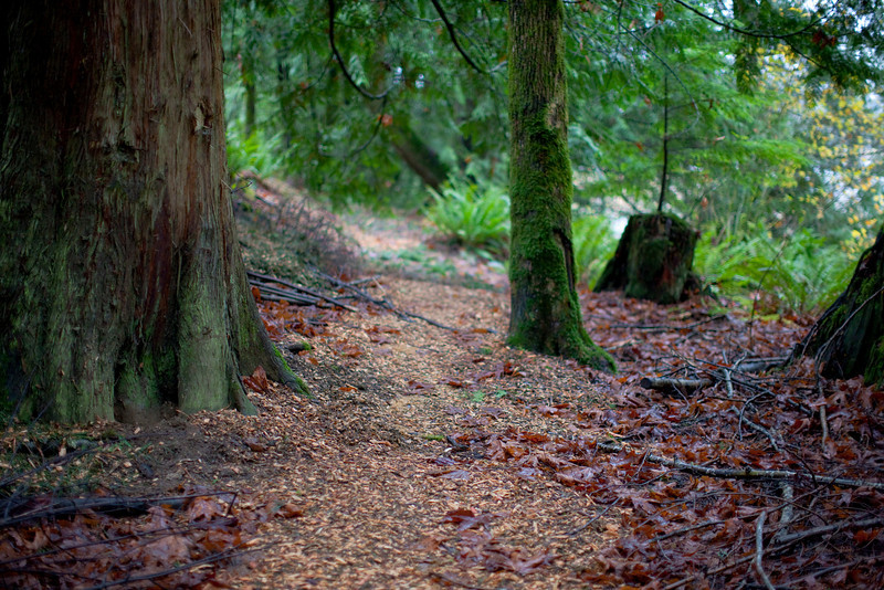 Trail isn't really well marked. You can see bark that someone recently put down when I scouted the trail November 2010.