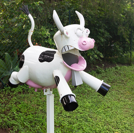LB 136 Frightened Cow