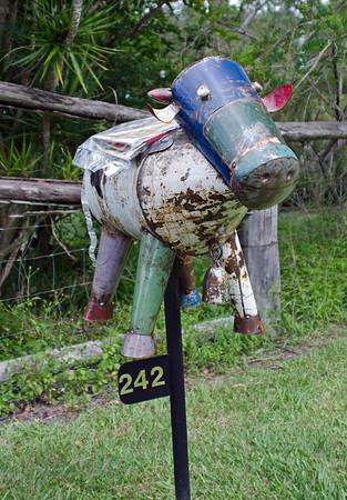 LB 29 Forlorn Cow