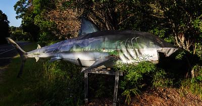 LB 85 Shark Attack