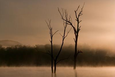 LD 05  Fog in the Morn