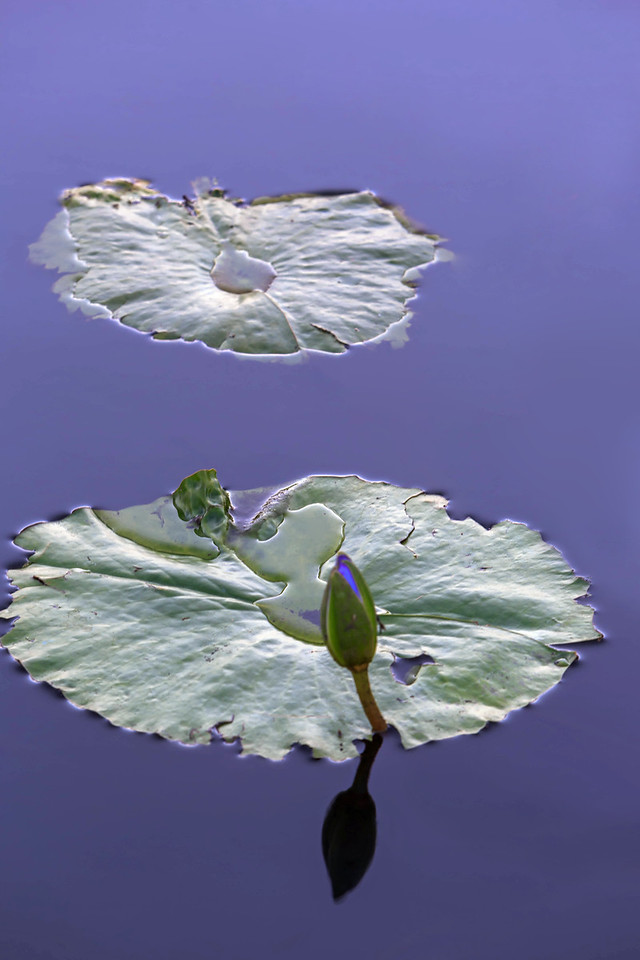 LD 19 The Lily Pads 2