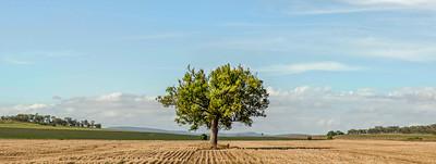 C 75 One Tree