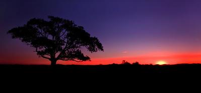 C 24 Silhouette Sunset
