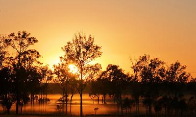 C 06 Aratula Sunrise