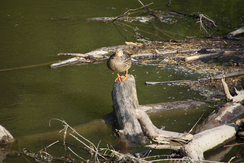 Pike Island, Fort Snelling State Park, Minnesota