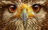 hawk eyes-1920x1200