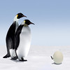 penguins egg foot