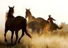 horses w cowboy