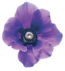 flower-purple-lo-res