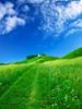 grass-sky