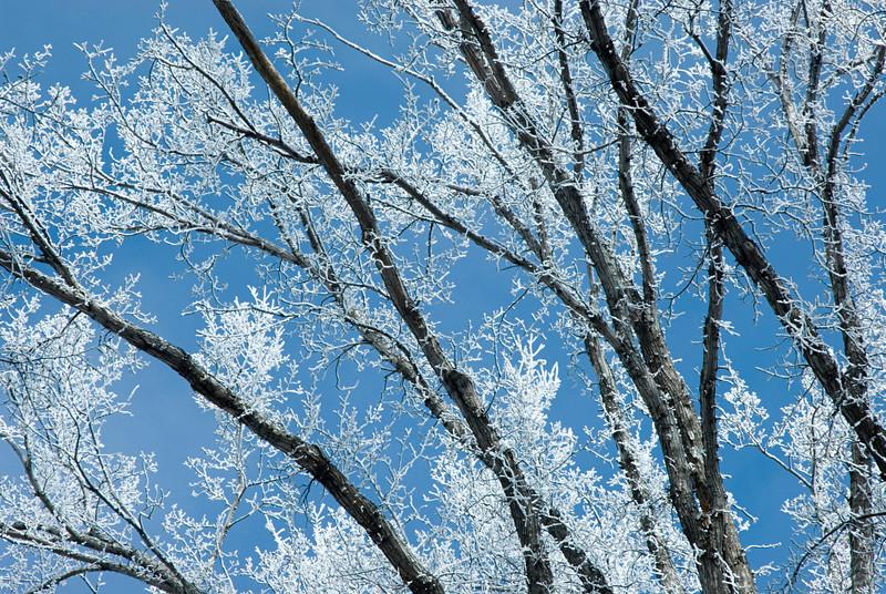 white on tree