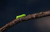 caterpillar-2560x1600