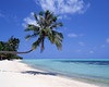 sea palm sand