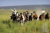 cowboys-herding-lo-res