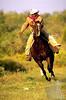 cowboy-gallop--lo-res