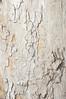 crisp platan bark texture with harsh shadows