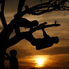 Children are seen silhouetted as they climb a tree in Allahabad, India, Sunday, Feb. 21, 2010.  (AP Photo/Rajesh Kumar  Singh)