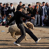 The owner runs to capture his animal, as a large crowd gathers to view the contest in a display of traditional entertainment,  as live animals pitted to fight against each other in Kabul, Afghanistan on Friday, Feb. 19, 2010.(AP Photo/Musadeq Sadeq)