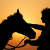 An Indian farmer massages his horse as dawn breaks on the outskirts of Allahabad, India, Sunday, May 23, 2010. (AP Photo/Rajesh Kumar Singh)