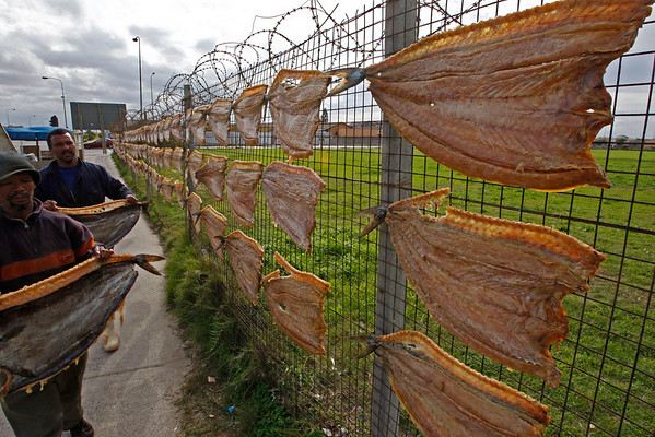 Men hang dried fish on a fence to be sold at around ten U.S. dollars a piece at a township on the outskirts of Cape Town, South Africa, Thursday, May 27, 2010. Thousands of South Africans live without running water in there houses or electricity.(AP Photo/Schalk van Zuydam)