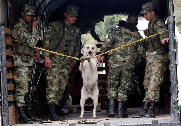 Soldiers and a dog stand on a truck as they patrol in Betania, south of Bogota, Wednesday, May 26, 2010. The government has tightened the security ahead of May 30 presidential election. (AP Photo/Fernando Vergara)