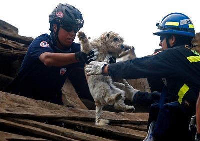 Rescuers carry a puppy founded alive in a destroyed house in Constitucion, Chile, Monday, March 1 , 2010. (AP Photo/Roberto Candia)